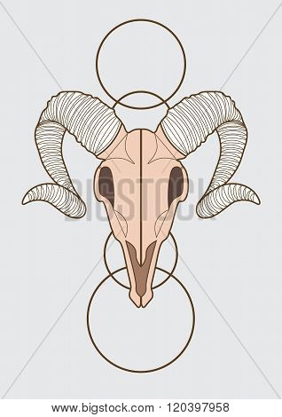 illustration of ram skull. vector eps 10