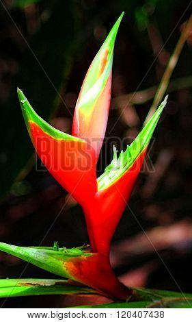 Tenerife flower