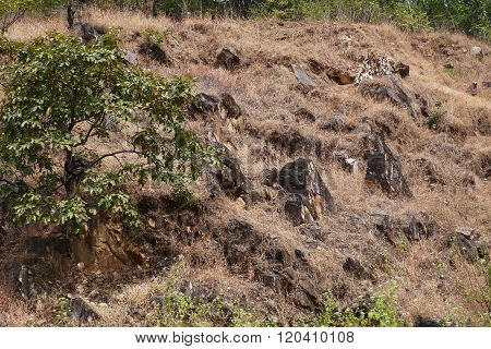 The jungle of northern Ghats in India