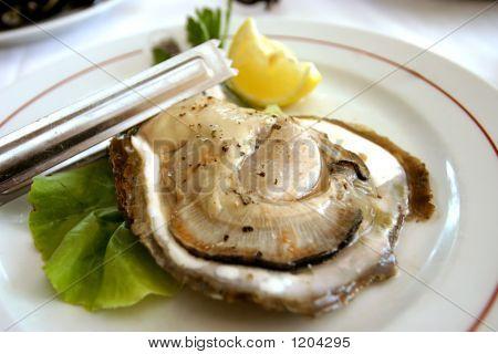 Huge Oyster