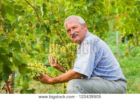 Happy viticultor content with this year's produce on the grape fields.