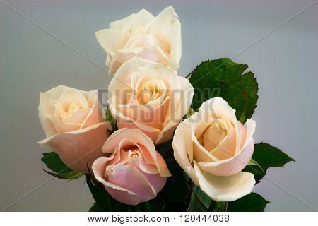 Pink Roses On The Light Background