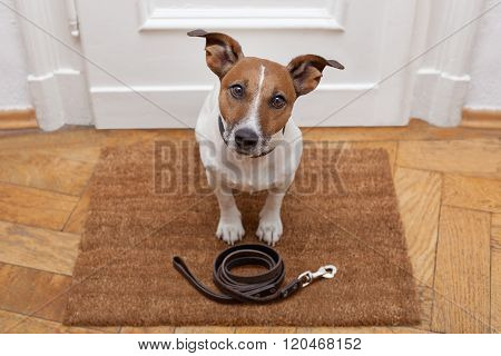 Dog Waits For Walking With Leash