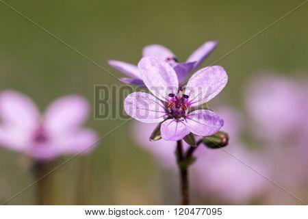 Macro photo of beautiful wild flowers, close up
