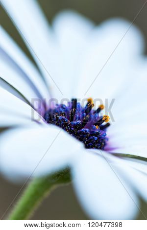 Detail of a daisy plant close up