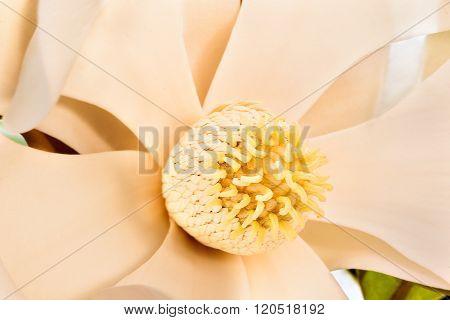 Close Up Macro Image Of A Magnolia Stigma