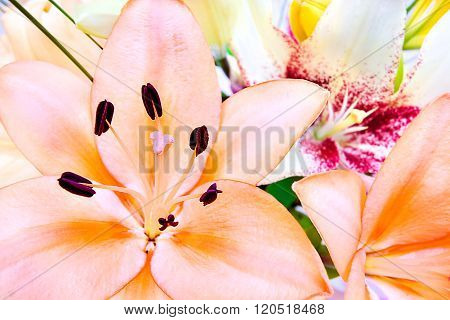 Close Up Image Focusing A Pink Lily Flower