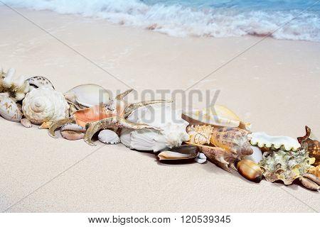 Tropical Shells On A Beach