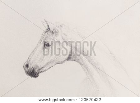 Draw pencil horse on old paper, vintage paper and old structure.