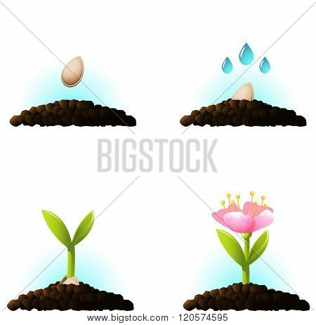 Seed Sprout. Vector Icons