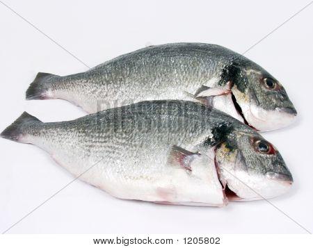 frischen Fisch.