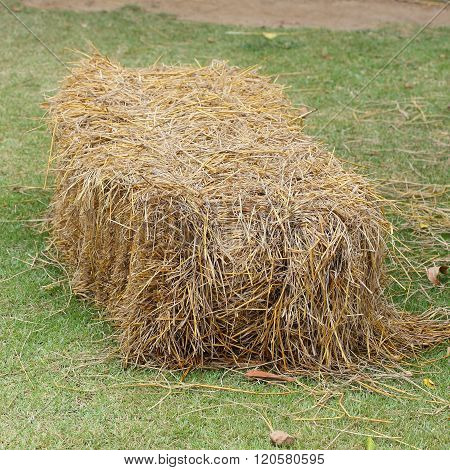 Pile Of Straw Used Animal Food In Farm