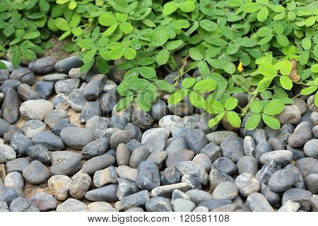 Pile Pebbles Stone And Green Leaf In Garden
