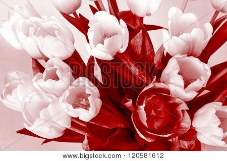Bouquet From Several Tulips Of Monochrome Red Color