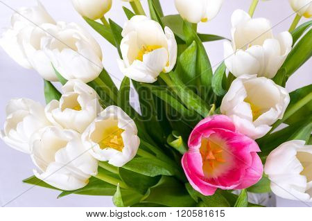 Several White Tulips And One Flower Red Closeup