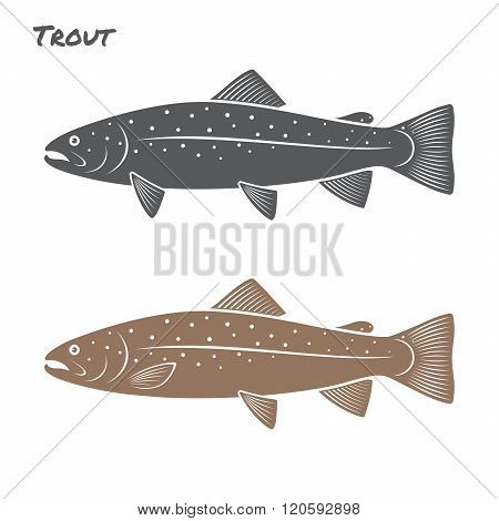 Trout fish vector illustration on white background