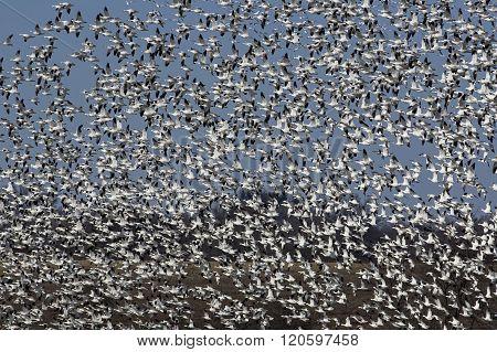 Spring Migration