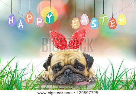 Happy Easter. A Young Cute Dog Puppy Pug Wearing Rabbit Bunny Ears Sitting with colorful eggs