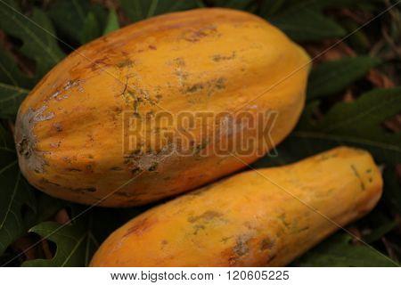 Thailand papaya fruit