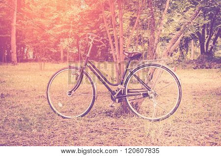 Vintage Bicycle In Garden With Sunlight.