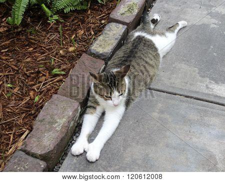 Six-toed cat at Hemingway House