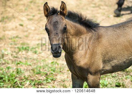 Arabian Horse In Catalunya