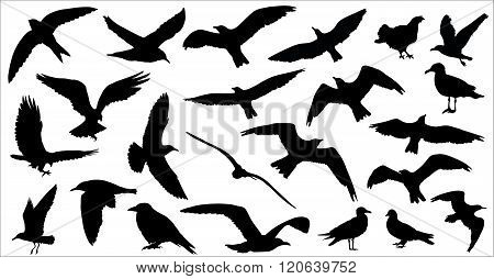 Set Of Birds Silhouettes 23 In 1 On White Background. Vector Illustration