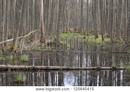 Trees in a swamp.