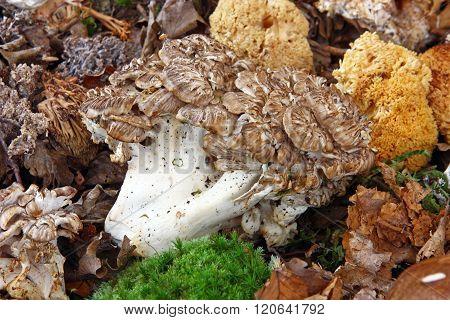 Lot Off Mushrooms