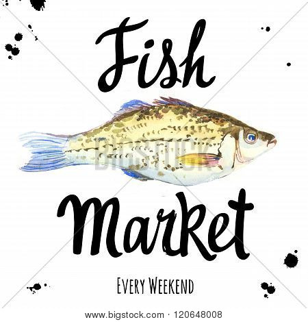 Illustration with watercolor crucian. Fish Market.