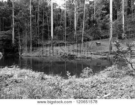 fotografia mostrando a beleza e a natureza em uma chácara no estado de Santa Catarina. ** Note: Soft Focus at 100%, best at smaller sizes