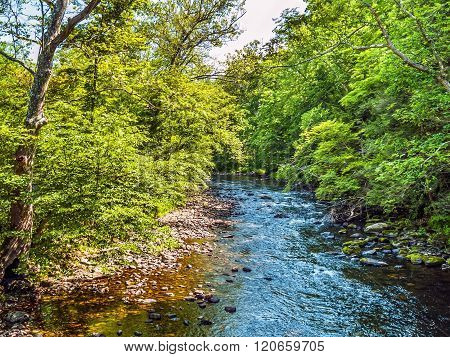 Summer Stream Landscape