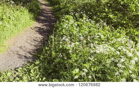 Flowers beside a path.