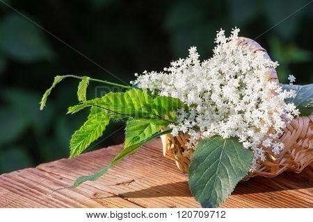 Collected Elderflower