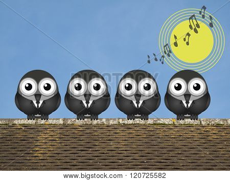 Comical bird boy band singing the dawn chorus perched on a rooftop against a clear blue sky poster