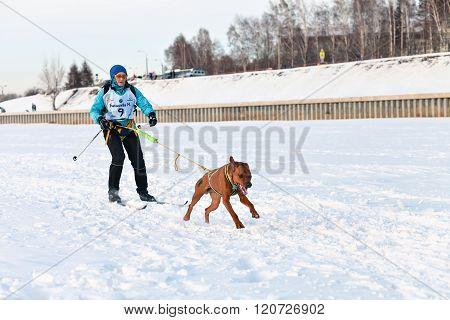 Baikal Race sled dog races
