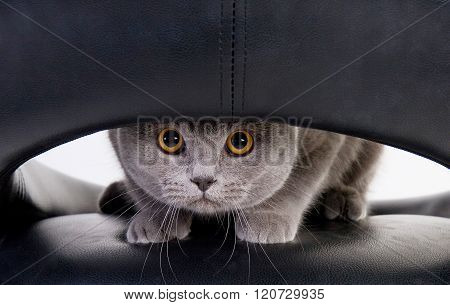 Funny Cat Looking Through A Hole