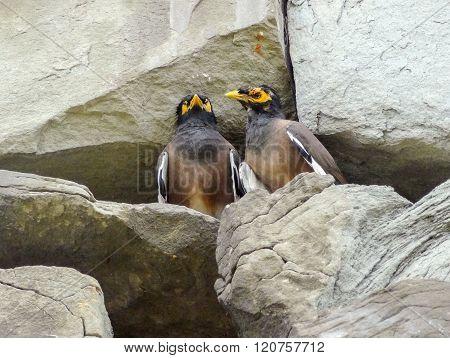 Birds In Stony Ambiance