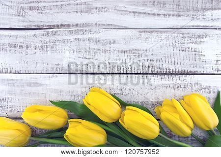 Row Of Yellow Tulips On White Rustic Wooden Background. Spring Flowers. Spring Background. Valentine