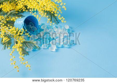 Yellow Mimosa Flower