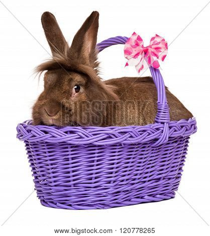 Cute Chocolate Colored Easter Rabbit In A Purple Basket