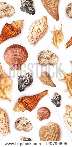 Seamless Seashell Background