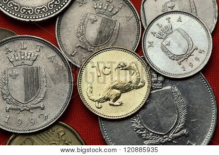 Coins of Malta. Weasel (Mustela nivalis) depicted in the Maltese one cent coin.