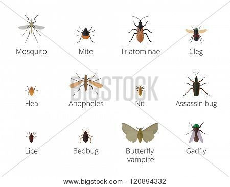 Insect parasites vector. Bug Insect parasites Set isolated on white background. Insect skin parasites biology bugs. Insect skin parasites flying bugs. Set funny insect skin parasites