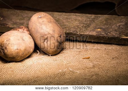 The Crude Potatoes On A Sacking Near An Old Board