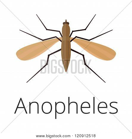 Anopheles mosquito vector illustration