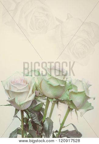 Roses frame. White roses on toned photo. Retro background