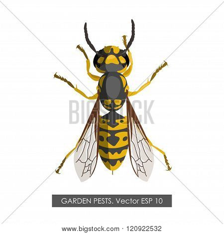 Detailed Drawing Of Wasp On A White Background