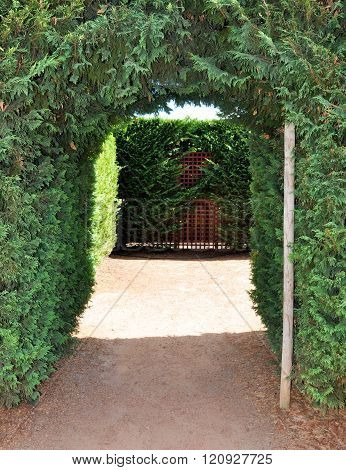 Hedge Maze Entrance