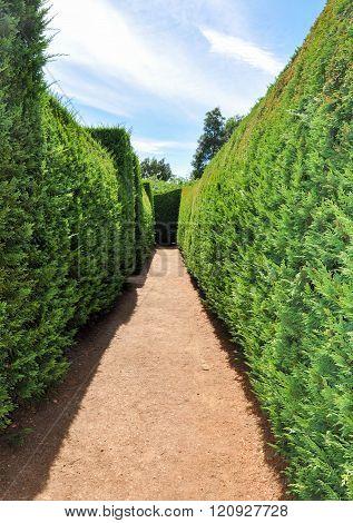 Hedge Maze: Amaze'n Margaret River